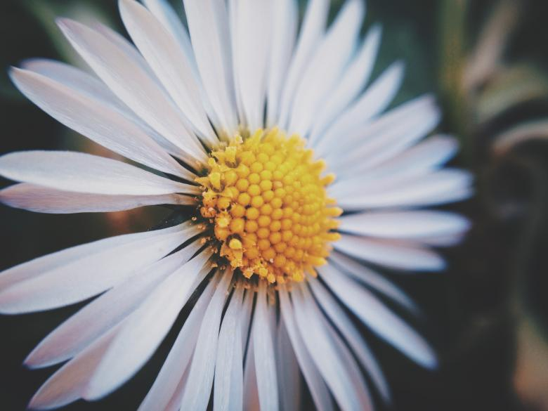 Free Stock Photo of White Flower Close Up Created by Unsplash