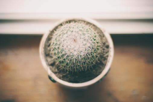 Cactus pot - Free Stock Photo