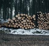 Free Photo - Wooden Logs