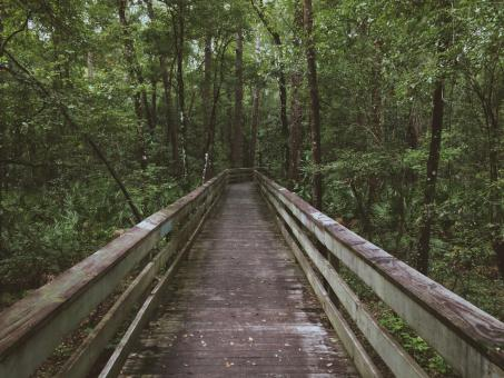 The Bridge in the woods - Free Stock Photo