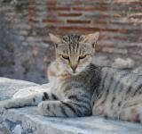 Free Photo - Royal egyptian cat laying on ruins