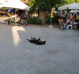Free Photo - Dog taking a nap in the middle of the Grand Bazaar