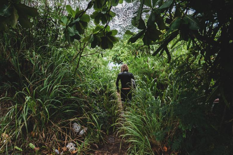 Free Stock Photo of Through the Jungle Created by Unsplash