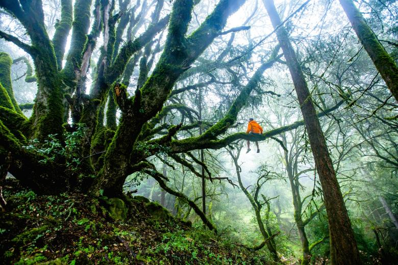 Observing the nature - Free Forest Stock Photos