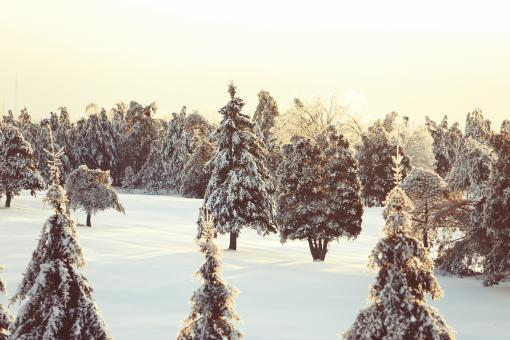 Snow in the woods - Free Stock Photo