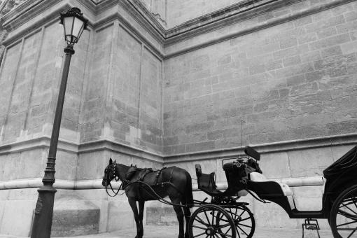 Horse and carriage - Free Stock Photo