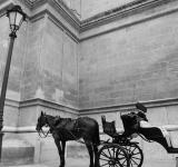 Free Photo - Horse and carriage