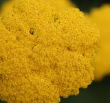 Free Photo - Yellow Flower Texture