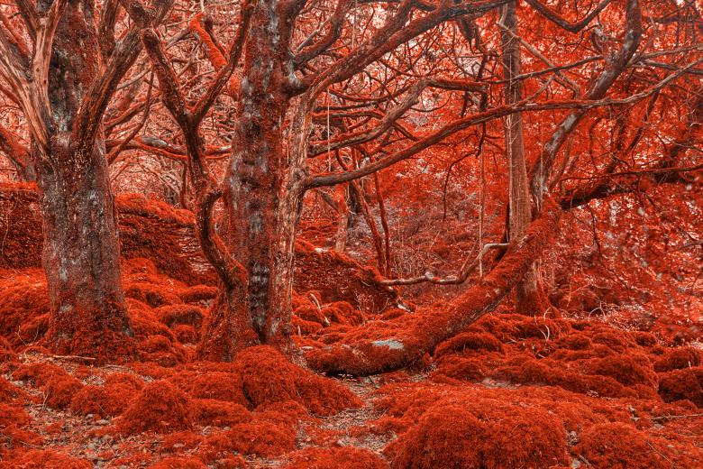Free Stock Photo of Ruby Moss Forest - HDR Created by Nicolas Raymond