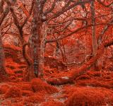 Free Photo - Ruby Moss Forest - HDR