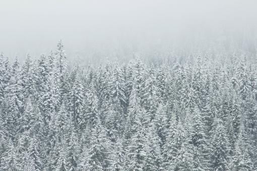 Bunch of Trees - Free Stock Photo