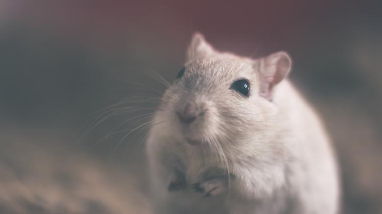 Free Stock Photo of Mouse Created by Unsplash