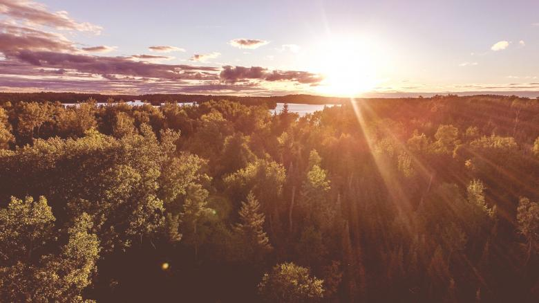 Bright - Free Forest Stock Photos