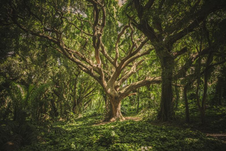 Tree in the Woods - Free Forest Stock Photos