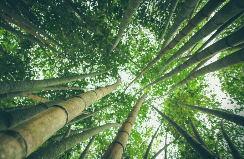 Bamboos - Free Forest Stock Photos