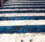 Free Photo - Zebra Walk