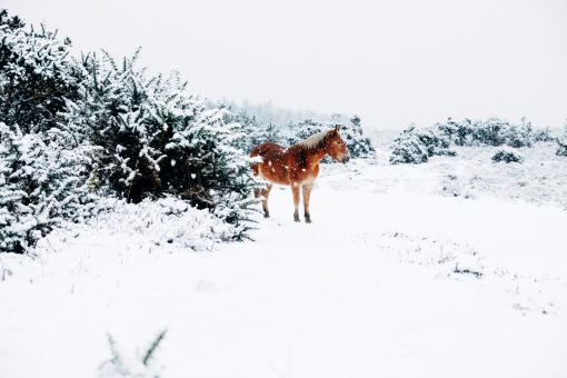 Horse In Snow - Free Stock Photo