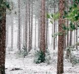 Free Photo - Forest In Winters