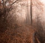 Free Photo - Misty Sun Kissed Trail - HDR