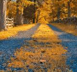 Free Photo - Gold Gravel Road - HDR