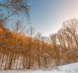 Free Photo - Golden Winter Forest - HDR