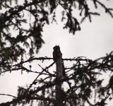 Free Photo - Woodpecker