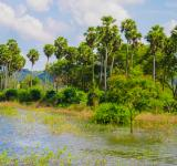 Free Photo - Tropical Lake