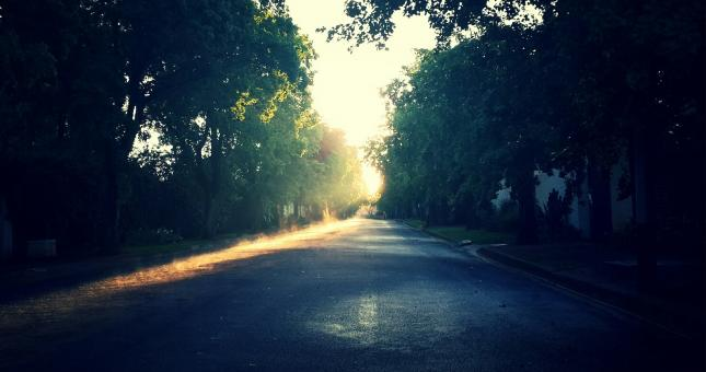 Shadowy Road - Free Stock Photo