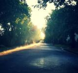 Free Photo - Shadowy Road
