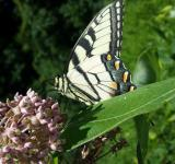 Free Photo - Nectar Loving Butterfly