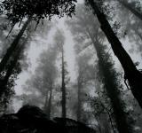 Free Photo - Foggy Forest