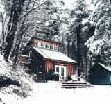 Free Photo - Forest House