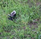 Free Photo - Abandoned Shoe