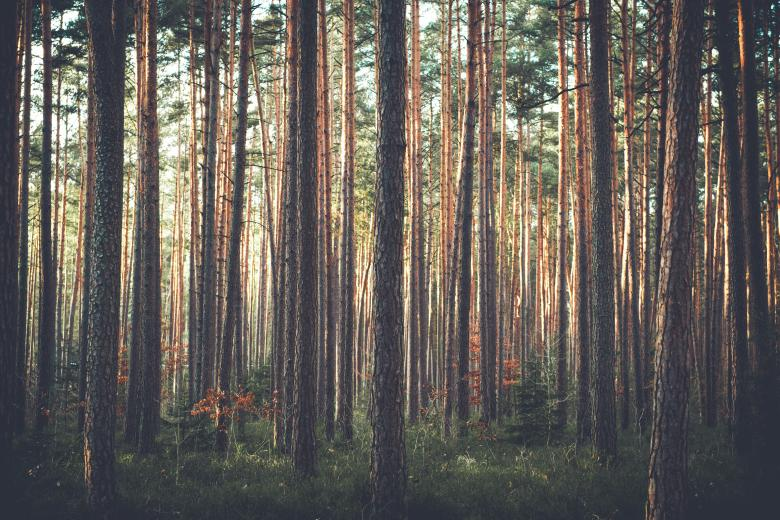 Dense Forest - Free Forest Stock Photos