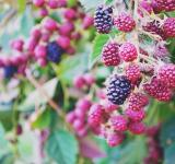 Free Photo - Berries