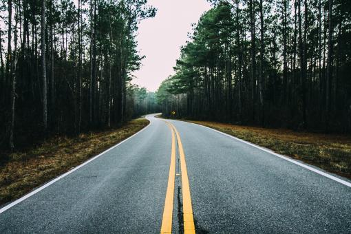 Road In The jungle - Free Stock Photo