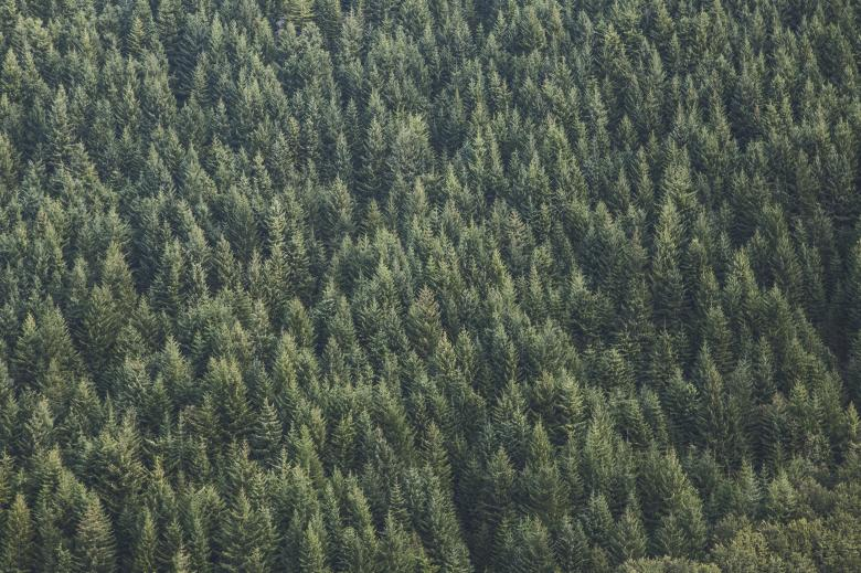 Thick Forest - Free Forest Stock Photos