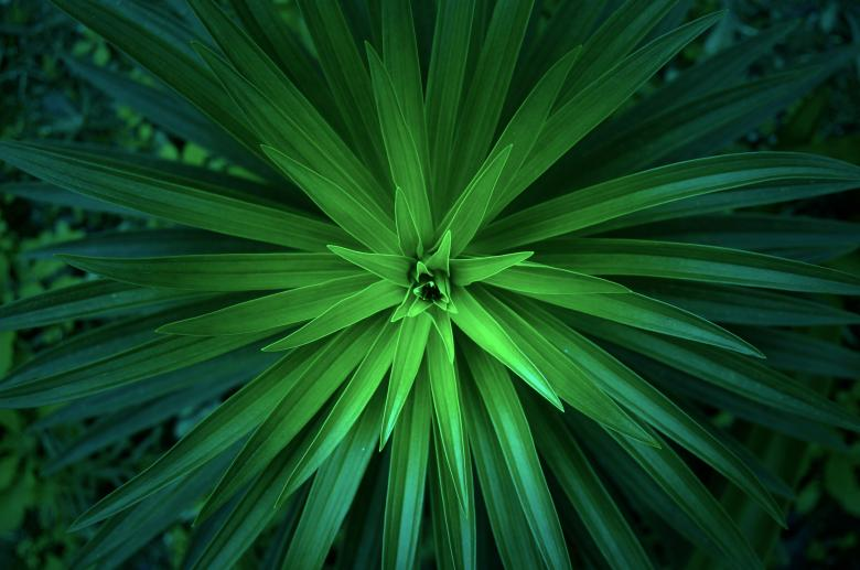 Free Stock Photo of Vivid Green Plant Created by Unsplash