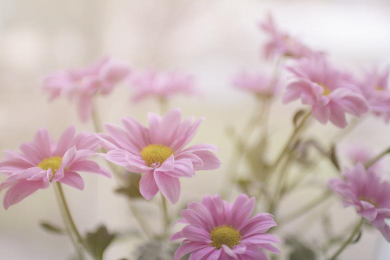 Free Stock Photo of Pink Flowers Created by Unsplash