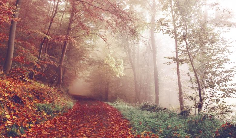 Free Stock Photo of Misty Woods Created by StockSnap