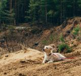 Free Photo - Dog In The Forest