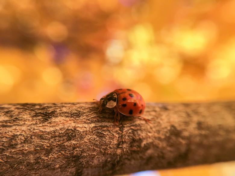 Ladybird Free Insect Stock Photos