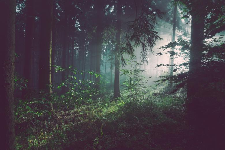 Free Stock Photo of Dark Forest Created by StockSnap