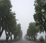 Free Photo - Foggy