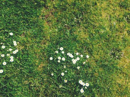 White Flowers on the Grass - Free Stock Photo