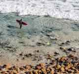 Free Photo - Surfer on the Shore