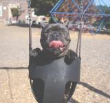 Free Photo - Having a Swing