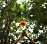 Free Photo - The Sunflower