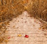 Free Photo - Rustic Marsh Boardwalk