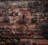 Free Photo - Grunge Peeled Paint Texture
